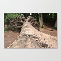 The Beech Forest Canvas Print