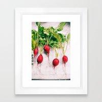 Radishes Framed Art Print