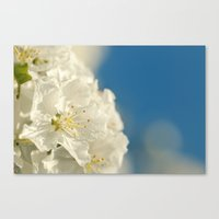 Spring Crab Apple Blosso… Canvas Print