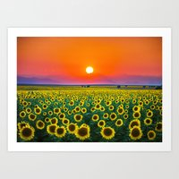 Sunflower Haze Art Print