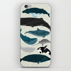 Whales and Porpoises sea life ocean animal nature animals marine biologist Andrea Lauren iPhone & iPod Skin