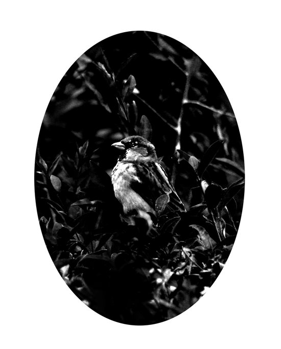 on the side of the bird's eye Canvas Print