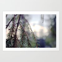 sunset in the woods. Art Print