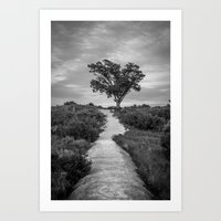 Windswept Tree at Fort Fisher NC -- Black and White Coastal Landscape Art Print
