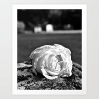 Art Print featuring Rose of remembrance by Vorona Photography