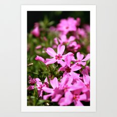 Spring Time Flowers Art Print