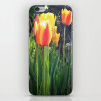 Spring Tulips in Bloom iPhone & iPod Skin