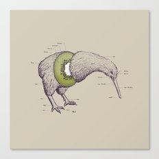 Kiwi Anatomy Canvas Print