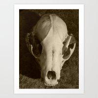 Raccoon Skull 2006 II Art Print
