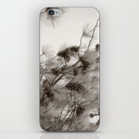 Pine Cones iPhone & iPod Skin