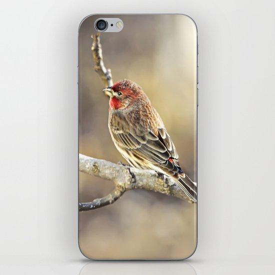 Rosy Little Finch iPhone & iPod Skin