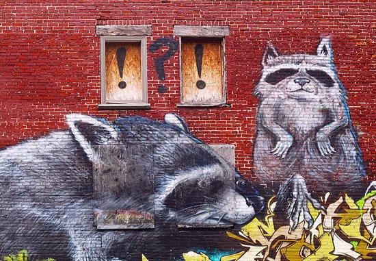 Raccoons  Art Print