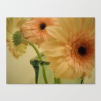 baby-pink daisy-petals ~ flowers Canvas Print