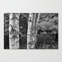 North Woods Canvas Print