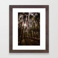 Sunlight through the Trees at Stover Framed Art Print