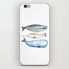 S'whale iPhone & iPod Skin
