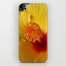 Hibiscus macro iPhone & iPod Skin