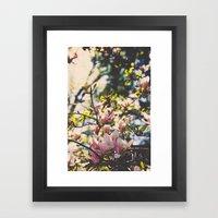 Magnolias in spring Framed Art Print