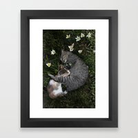Sleep [A CAT AND A KITTE… Framed Art Print