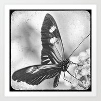 Butterfly, Black and White Art Print