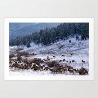 Elk In Estes Park Art Print