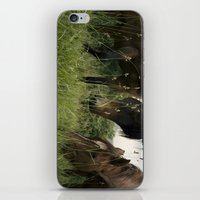 horses iPhone & iPod Skin