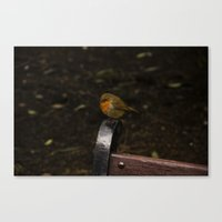 Resting Robin Canvas Print