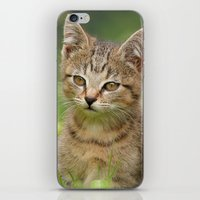 Little Tiger in Gras iPhone & iPod Skin