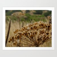 Navaro Bluffs, fall flowers II Art Print