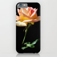 iPhone & iPod Case featuring Rose of St. James by Stephie Butler Photography