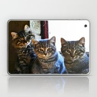 What Are You Looking At? x 3 Laptop & iPad Skin