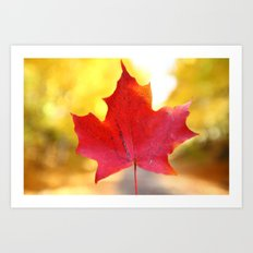 Red Maple Leaf Art Print