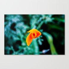 Goldfish Poppy Canvas Print