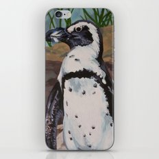 African Penguin iPhone & iPod Skin