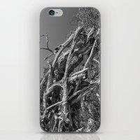 Drift Wood  iPhone & iPod Skin