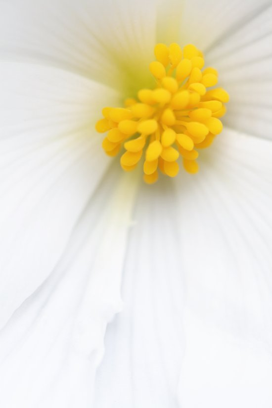 Flowers in macro range Art Print