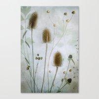 Dipsacus Canvas Print