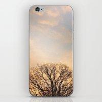 Tree Top iPhone & iPod Skin
