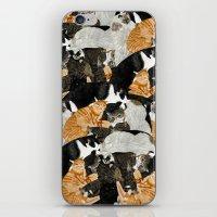 Cat Print iPhone & iPod Skin
