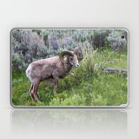 Big Horn Ram Laptop & iPad Skin