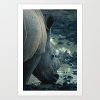 Thirsty Rhino Art Print