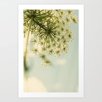Botanical Queen Anne's Lace Art Print
