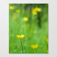 One In Focus Canvas Print