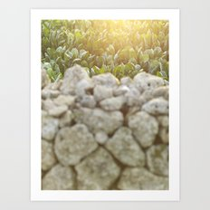 Sunset over a Mediterranean field and a dry stone wall Photo for Interior Design Art Print