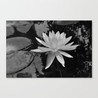b&w water flower Canvas Print