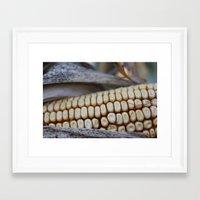 Corn of fall Framed Art Print