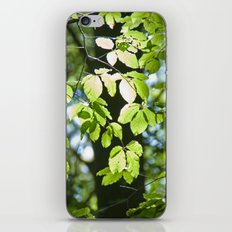 Light in the leaves iPhone & iPod Skin