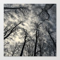 Sky-reaching Trees Canvas Print