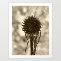 Dead Cone Flower 3 Art Print