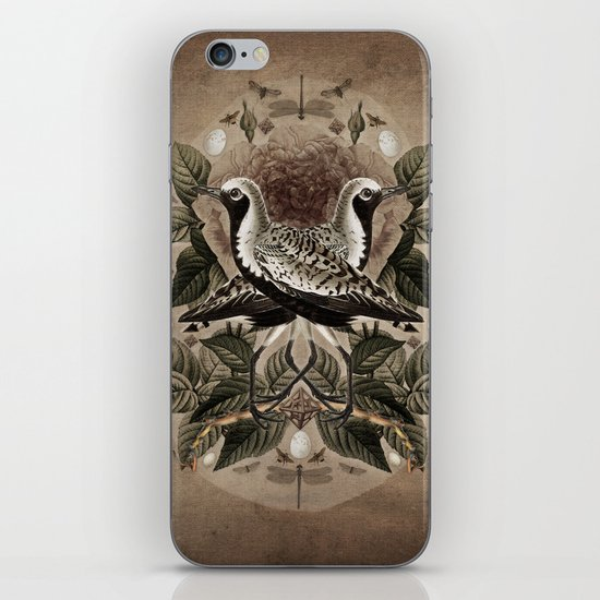 Pluvialis squatarola iPhone & iPod Skin